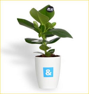 promotionele artikelen - voorbeeld: bossers & cnossen plant